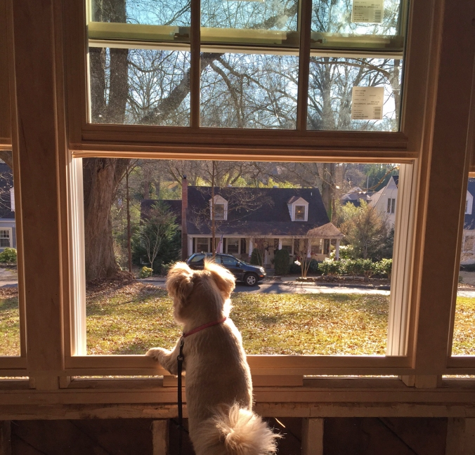Miss Pepper has found her new favorite vantage point... no squirrel is safe!